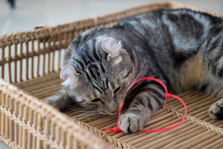 cable tie: A touch of love Cats being fun to play pink Cable Tie heart Stock Photo