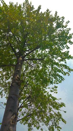 looking in corner: Corner under a tree looking up Stock Photo