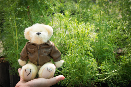 angry teddy: Teddy Bear Put the jacket in angry mood