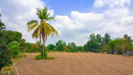 and plot: Coconut trees on a plot of soil Stock Photo