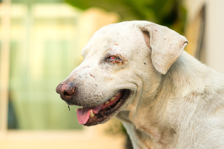 scars: white stray dog with scars
