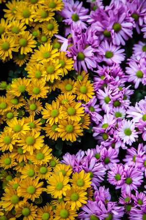 Refreshed Blooming flowers garden Joyful in Spring flower Colorful . Zdjęcie Seryjne