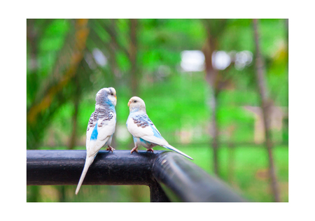 Love bird or Little parrot are happy and Flirt of dating on the tree .