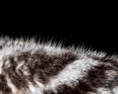 Fur cat or wool textures Zdjęcie Seryjne