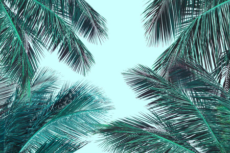 Hello summer floral with tropical green leaves Concept. coconut palm leaves isolated on Blue background