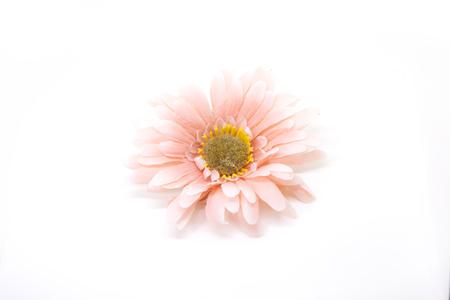 Hello summer Refreshed Blooming flowers on white background . Joyful in Spring flower Colorful . Zdjęcie Seryjne