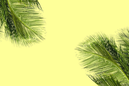Hello summer floral with tropical green leaves Concept. coconut palm leaves isolated on Yellow background Zdjęcie Seryjne