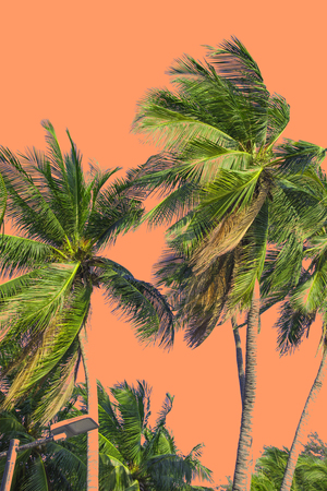 Hello summer floral with tropical green leaves Concept. coconut palm leaves isolated on Pink background Zdjęcie Seryjne