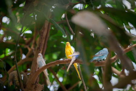 Love bird or Little parrot are happy on the tree . Fresh, natural