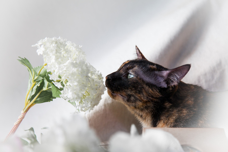 Cat cute little is smell the flowers kitten in the fluffy pet comfortably is feeling happy in the morning.