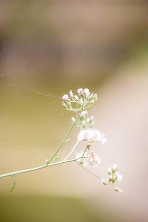 spiderweb: Spiderweb on the flower.