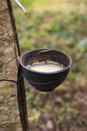 tapper: Rubber tappers in Thailand