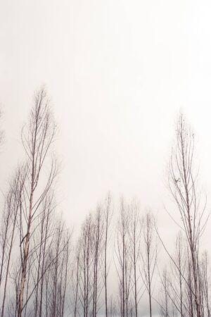 dead wood: Dried trees in winter