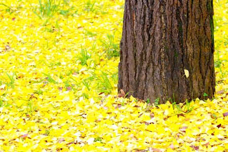 yards: fallen autumn leaves in the park,Leaves fall to the ground background.