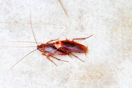 hacer el amor: cucaracha hacer el amor en el suelo de cemento