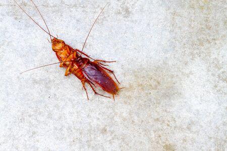 faire l amour: cockroach make love on concrete floor