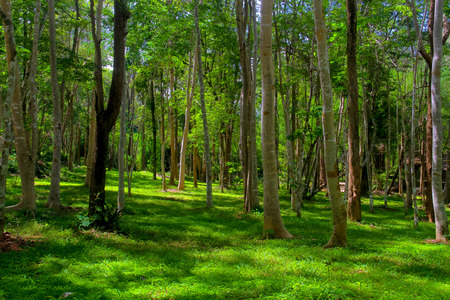 sustain: Trees in a green forest,Competition of pine trees To sunlight necessary to sustain life.