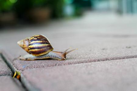snail walking on concrete floor Stock Photo