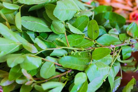 peppertree: Schinus terebinthifolius Brazilian Pepper-tree with papaya salad.Thai favorite food Stock Photo
