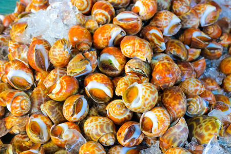 babylonia areolata or Spotted babylon are placed at the seafood market Stock Photo