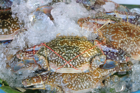 blue swimmer crab: Flower crab, Blue crab, Blue swimmer crab, Blue manna crab, Sand crab, Portunus pelagicus, Portunus or Sand crab at market Stock Photo