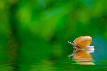 snail on the water