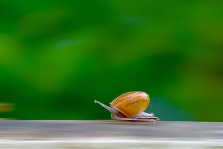 the requirement: Business competition requires quicktime concept. Snail high speeds