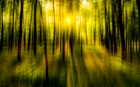blurred abstract background photo of natural forest with misty sun light shining out of the treetops with surreal motion blur effect Standard-Bild