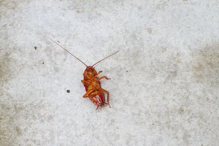 cockroach on concrete floor