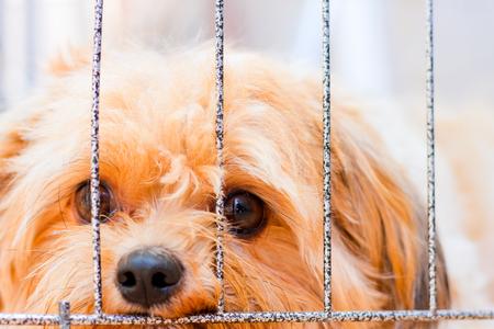 alone, lonely, sad dog missing boss.
