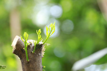 strong seedling growing from tree : business concept of emerging leadership success generating new business.