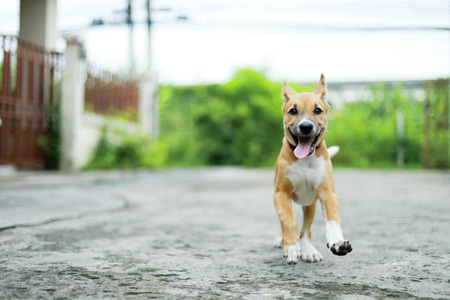 dog running on the road. happy cute funny dog running on the road