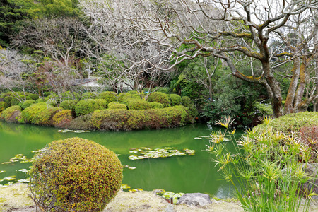 The pond and garden with green water and reflection of tree in the water located at Umi Jigoku or sea hell featuring a pond with blue hot stream water, Beppu, Oita, Japan.
