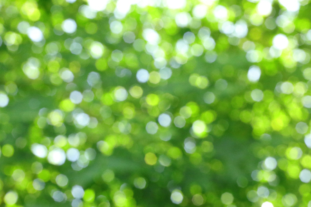 Blurry green circular bokeh cause of defocus of sunlight through the green tree Stock Photo
