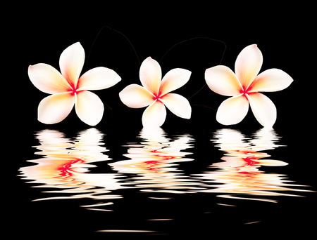 beautiful flower  with reflection on water surface