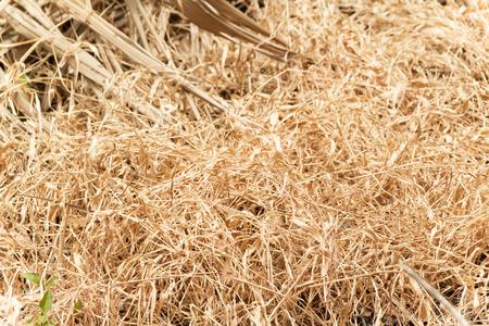 Hay died in the garden