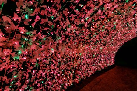 Tunnel of light : Nabana No Sato,Japan