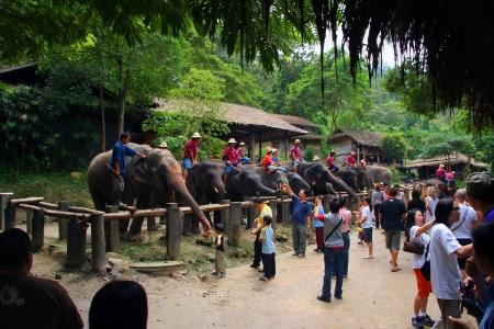 elephant camp, before show