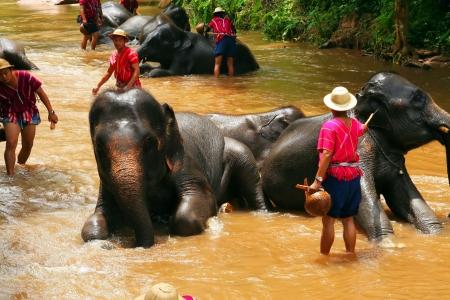 elephant take a bath
