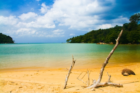 Lonely beach, phuket island , thailand photo