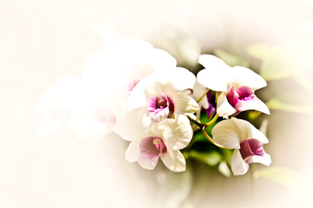 orchid: White of Orchid Flower with Retro Effect filter Stock Photo