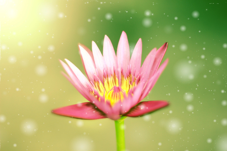 lotus effect: Pink lotus flower, with retro filter effect. Stock Photo