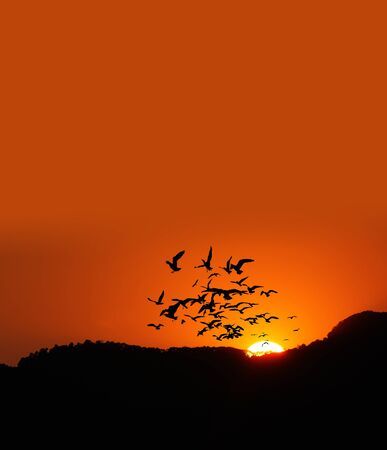 fly: sunset time on the mountain with birds Stock Photo