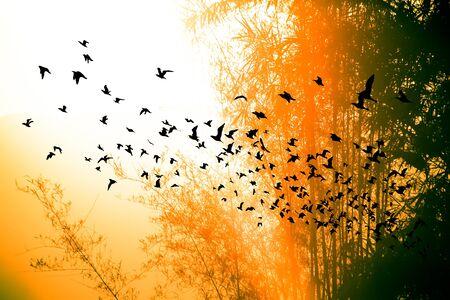 bandada pajaros: tiempo de la puesta del sol en la montaña y el árbol de bambú con las aves