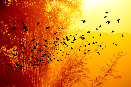 sunset time on the mountain and Bamboo tree with birds