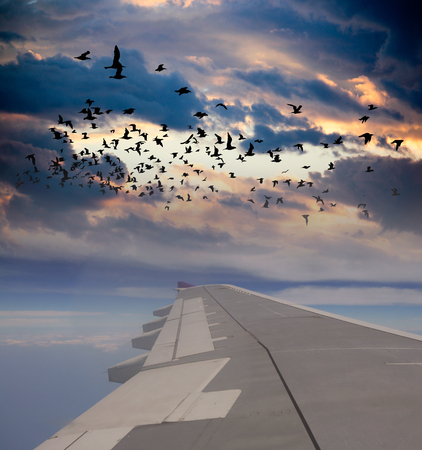 bird view: Cloud and bird view from Wing of Airplane