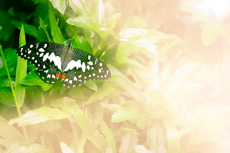 gree: Close up butterfly insect with gree tree background