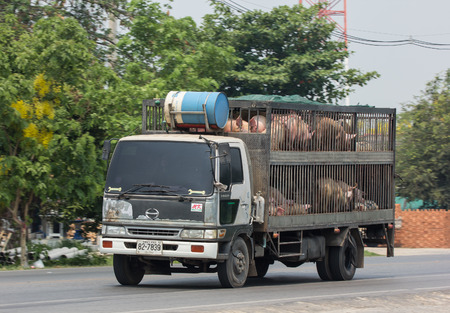 CHIANG MAI, THAILAND - APRIL 24 2018: Pig Animal cage container truck of Betagro Company. On road no.1001, 8 km from Chiangmai Business Area.