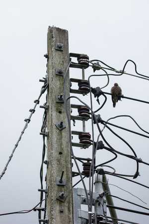 Closeup Bird and Eletricity line and electricity post wtih blue sky background