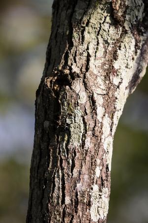 Close up Mos on Cinnamomum camphora tree Banco de Imagens